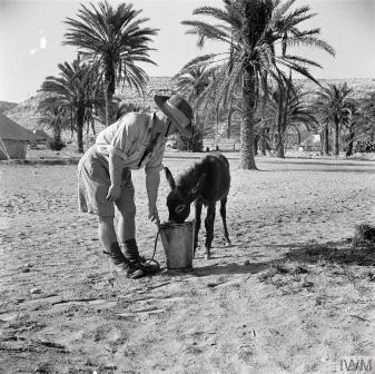 Helping a donkey